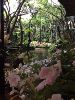 จัดสวน natureone.asia knockdoor